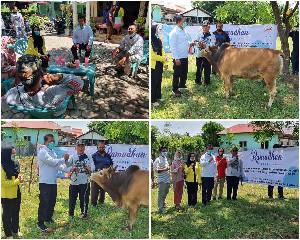 Binda Aceh dan E- Sport  Bagikan 6 Sapi Meugang