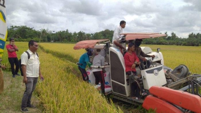 Menjamin Stok Pangan Aman, Petani Dilarang Jual Padi ke Luar Daerah