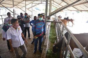 Plt Gubernur Aceh Tinjau Peternakan Sapi Indra Puri