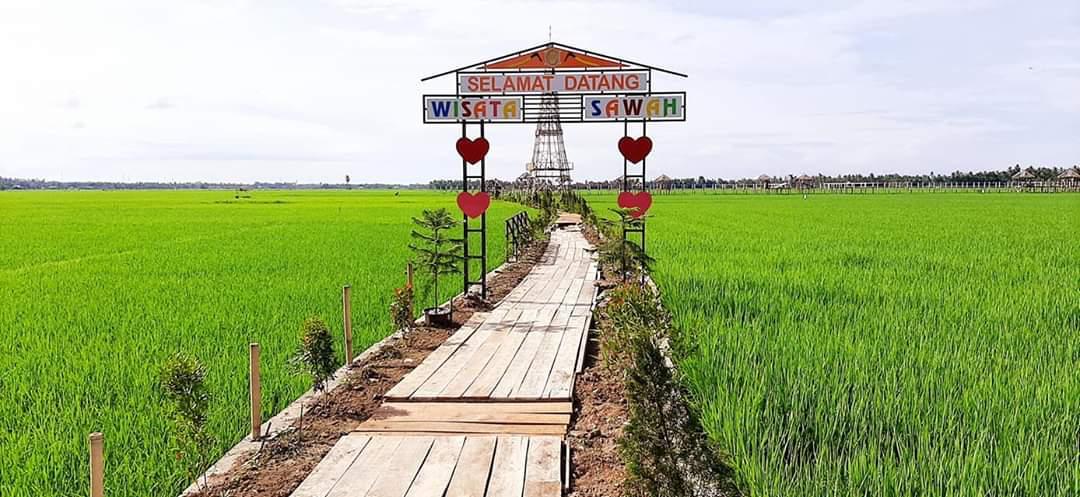 Pesona Wisata Sawah di Gampong Maneh Kareung