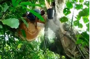 Berkah Dimasa Pandemi, Permintaan Madu Hutan di Aceh Meningkat