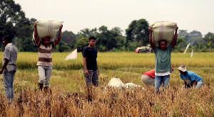 Krisis Pangan Nasional, Siapkah Pemerintah Aceh?