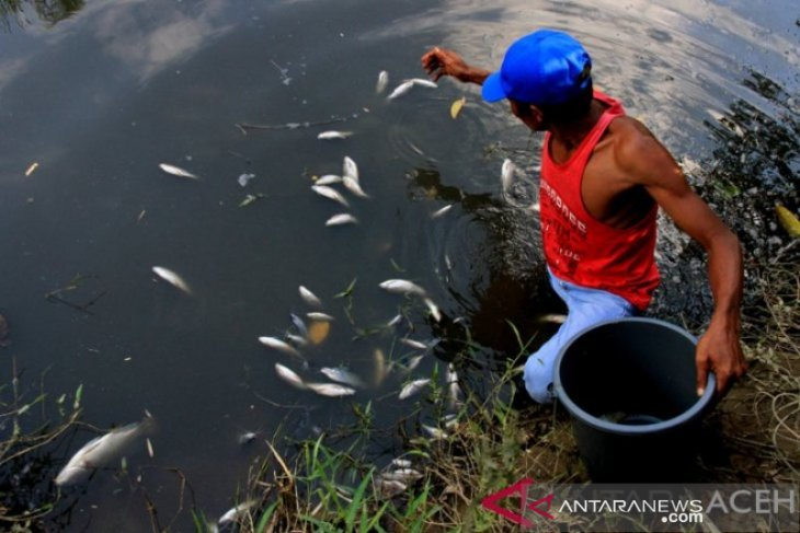 Begini Jawaban GM PT KIM Dugaan Pencemaran Lingkungan PKS di Nagan Raya