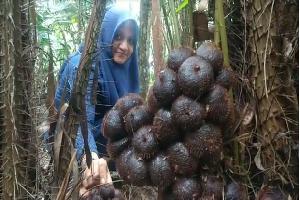Tanam Pohon Salak di Halaman Rumah,  Warga 1 Desa di Aceh Bangun Ekonomi