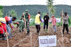 Perdana, Kota Sabang Tanam Padi Gogo Seluas 13 Hektare