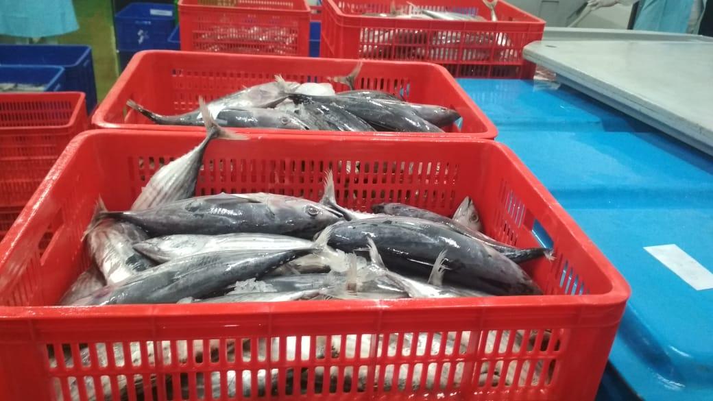 Kucurkan Stimulus, KKP Ingin Pemasar Ikan Konsisten Jaga Kualitas