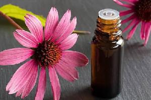 Herbal Echinacea Bagus untuk Terapi COVID-19