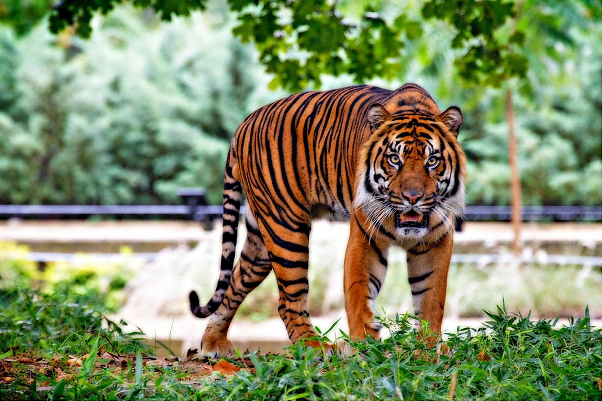1 Juta Spesies Hewan Terancam Punah Akibat Ulah Manusia