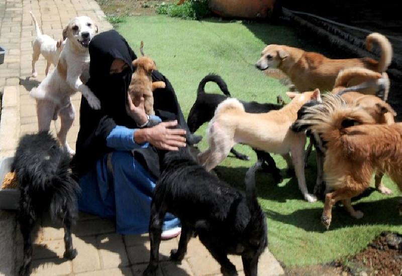 Kisah Hesti Sutrisno Perempuan Bercadar Peduli Anjing Liar