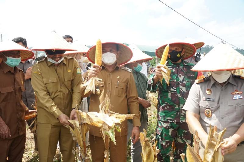 Panen Bersama Jagung Pioneer, Mawardi Ali Ajak Warga Berdayakan Lahan untuk Pertanian