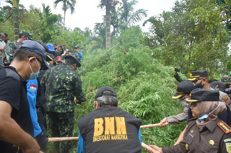 BNN RI Temukan 9 Hektare Ladang Ganja di Aceh Utara