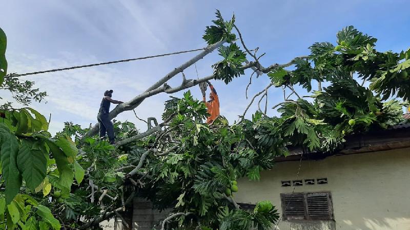 Satu Unit Rumah Warga Rusak Akibat Dihantam Angin Kencang di Langsa