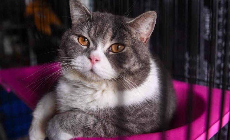 Enam Kucing Ras dari Penggerebekan Narkoba Dilelang