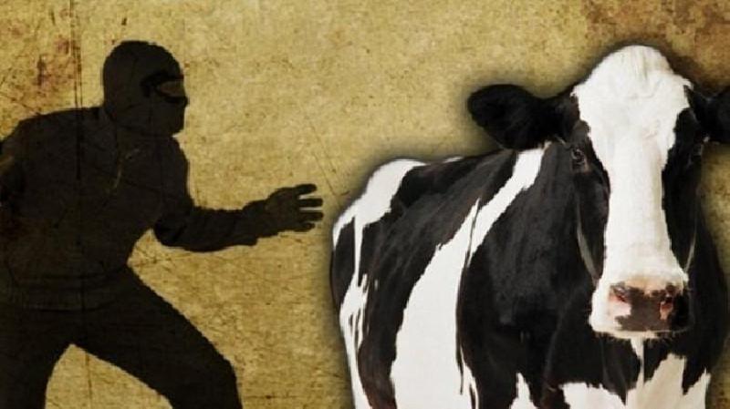 Larikan Diri Saat Diringkus, DPO Kasus Pencurian Lembu di Pidie Dilumpuhkan