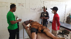 Seorang Pria Kritis Akibat Diserang Gajah Liar di Aceh Utara