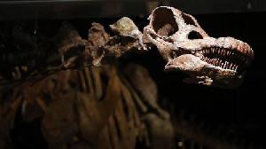 China Bongkar Fosil Mamalia Terbesar Bumi