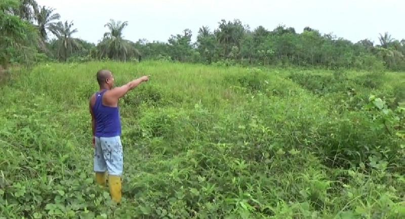 Petani Aceh Tamiang Kecewa Dengan Koperasi Wassalam, Setahun Sawitnya Ditumbang dan Tak Ditanami