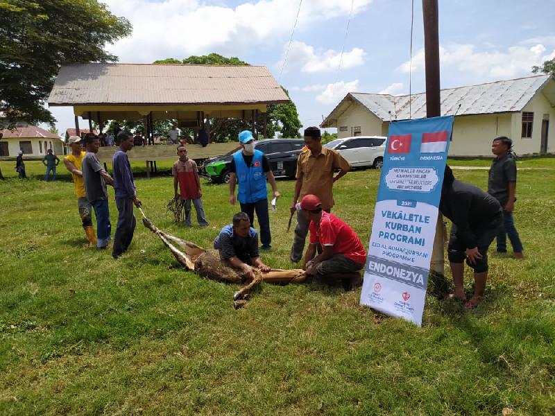 Turki Salurkan Hewan Kurban Untuk Aceh Melalui ACT