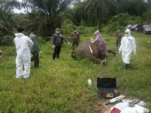 Ketua Edelwies PNL: Segera Temukan Pembunuh Gajahnya dan Hukum Semana Mestinya