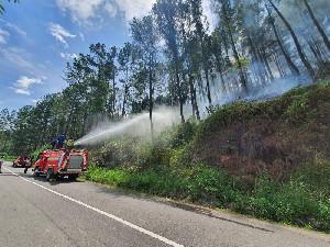 42 Hektar Hutan di Bener Meriah terbakar