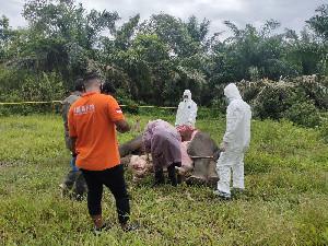 Kejam, Satu Gajah Sumatra Mati Tanpa Kepala, Diduga Dibunuh Pemburu