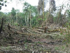 WALHI: Setiap Hari Hutan Aceh Terus Menyusut