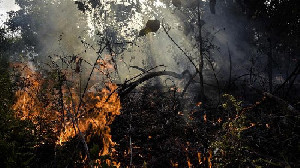 Karhutla Terjadi di Sumsel, Seluas 5 Hektar Terbakar