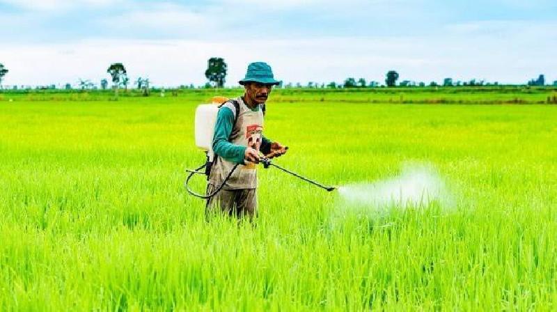 Membandingkan Pestisida Kimiawi dan Alami, Petani Harus Tahu
