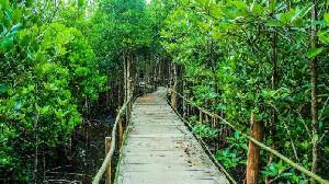 Berikut 5 Wisata Hutan Manggrove Indonesia