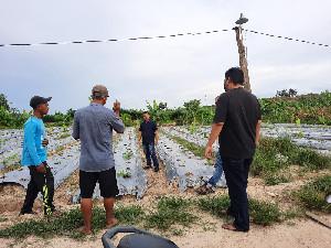 Blusukan, Ketua Pemuda Tani Dengarkan Keluhan Kelompok Tani Rumpun Bambu