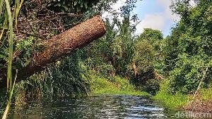 Ini Ancaman Jika Illegal Logging di Aceh Tak Teratasi