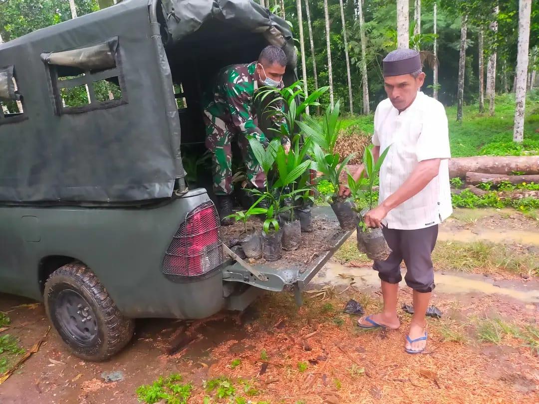 Babinsa TNI Serahkan Ratusan Bibit Pinang Kepada Masyarakat Nisam Antara